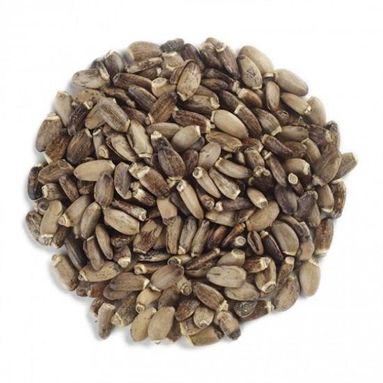 Seminte de Armurariu 1kg