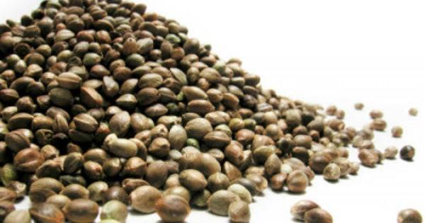 cum se tratează frânghia de semințe varicoase unguent în imagini de perete varicoză